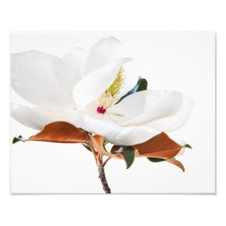 マグノリアの花の白いマグノリアの花柄の花 フォトプリント