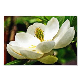 マグノリアの花の終わり フォトプリント