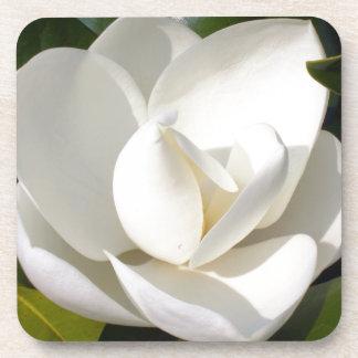 マグノリアの開花 コースター