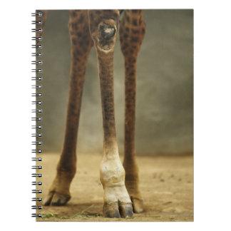 マサイ族のキリン、足の低い角度眺め、Giraffa ノートブック