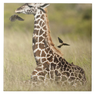 マサイ族のキリン、Giraffaのcamelopardalis タイル
