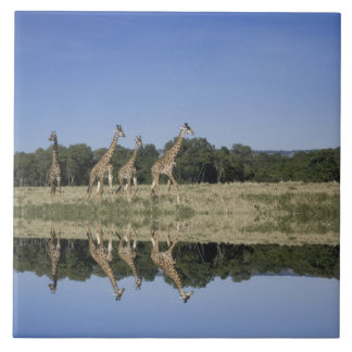 マサイ族のキリン、Giraffaのcamelopardalis、マサイ語 タイル
