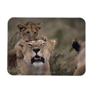 マサイ族のマラの国立保護区6 マグネット