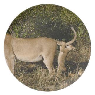 マサイ族のマラの国立保護区、ケニヤ プレート
