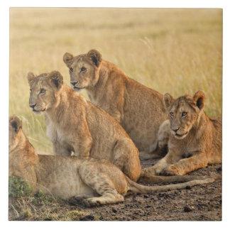 マサイ族のマラの国立保護区、ケニヤ、2005年7月 タイル