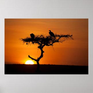 マサイ族マラ、ケニヤの日の出 ポスター