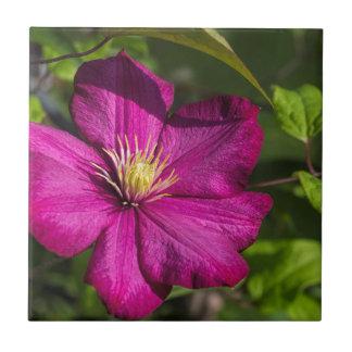 マゼンタのクレマチスの花 タイル