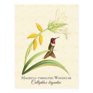 マゼンタのThroatedハチドリの芸術の郵便はがき ポストカード