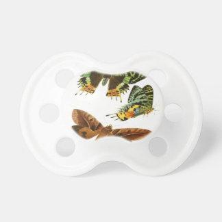 マダガスカルの蝶 おしゃぶり