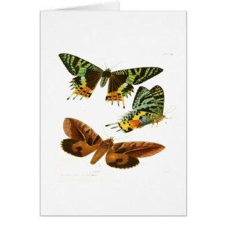 マダガスカルの蝶 カード