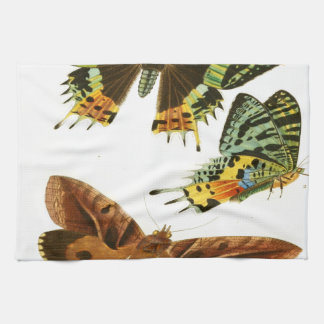 マダガスカルの蝶 キッチンタオル