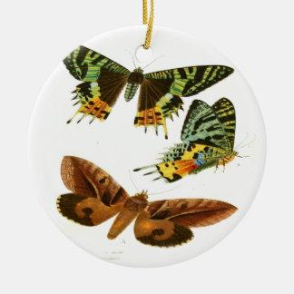 マダガスカルの蝶 セラミックオーナメント