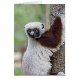マダガスカルのAnkarafantsikaの予備、Ampijoroa. カード