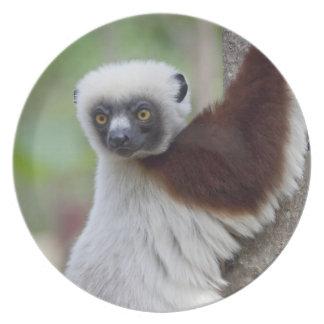 マダガスカルのAnkarafantsikaの予備、Ampijoroa. プレート