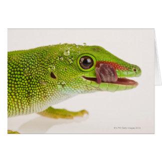 マダガスカル日のヤモリ(Phelsumaのmadagascariensis カード