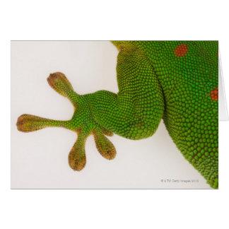 マダガスカル日のヤモリ(Phelsumaのmadagascariensis 2 カード