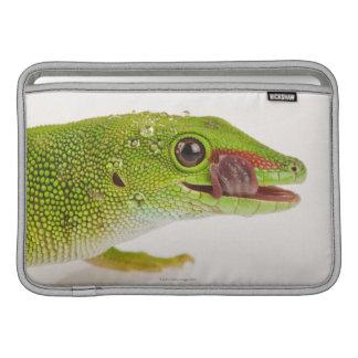 マダガスカル日のヤモリ(Phelsumaのmadagascariensis MacBook スリーブ