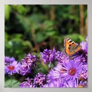 マダラチョウおよび紫色の花 ポスター