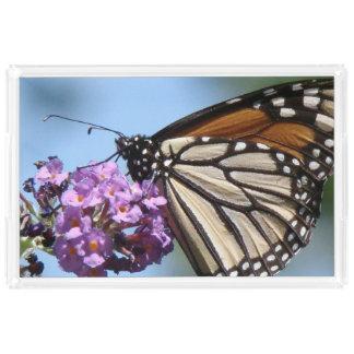 マダラチョウによっては花の皿が開花します アクリルトレー