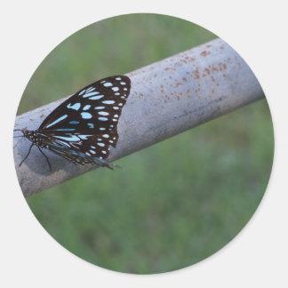 マダラチョウ青い田園クイーンズランドオーストラリア ラウンドシール