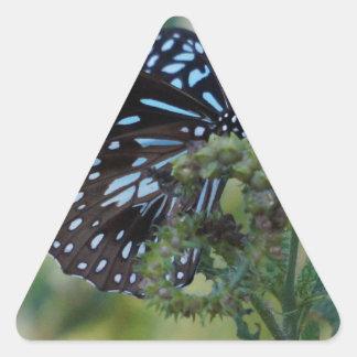 マダラチョウ青い田園クイーンズランドオーストラリア 三角形シール