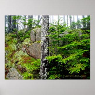 マツ森林、シカの島、メイン ポスター