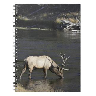 マディソンの川から飲んでいるBullのオオシカ ノートブック