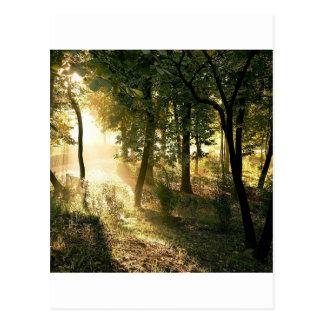 マドリードの木の夜明け ポストカード