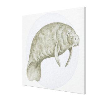 マナティー(Trichechus sp。)のイラストレーション キャンバスプリント