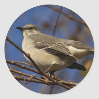 マネシツグミの鳥類学 ラウンドシール
