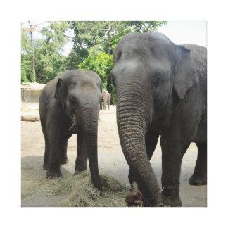 ママ及びベビー象 キャンバスプリント
