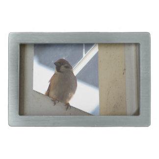 マヤの鳥 長方形ベルトバックル