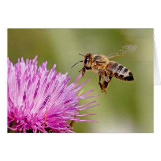 マリアアザミの花の蜜蜂の着陸 カード