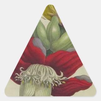 マリアSibylla Merian著バナナの花序 三角形シール