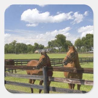 マリオン郡の純血種の馬の農場、 スクエアシール