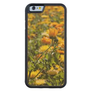 マリーゴールドのcalendulaの花分野 CarvedメープルiPhone 6バンパーケース
