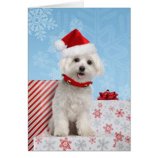 マルタの子犬のクリスマスカード カード