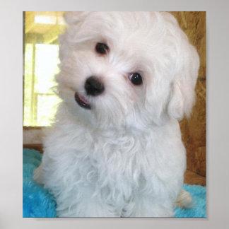 マルタの子犬ポスター ポスター