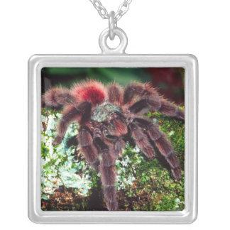 マルティニクの木のくも、versicolor Avicularia シルバープレートネックレス