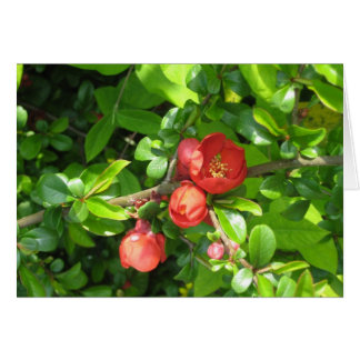 マルメロの花 カード
