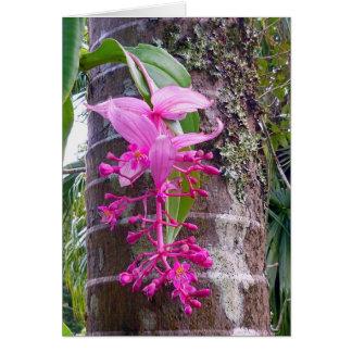 マレーシアの蘭木 カード