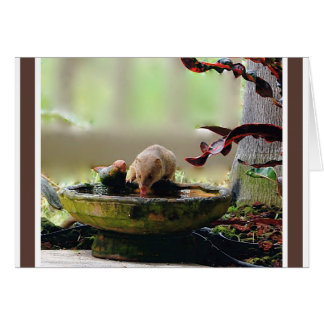 マングースの水たまりの野性生物 カード