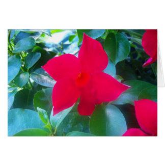 マンデビラ属の赤い乗馬フードの花 カード