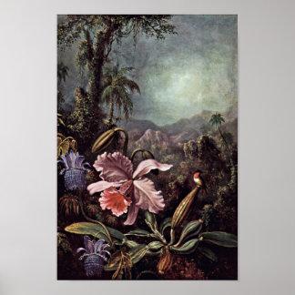 マーティン著蘭の情熱の花そしてハチドリ ポスター
