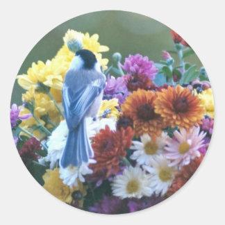 ミイラの《鳥》アメリカゴガラ ラウンドシール