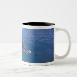 ミクロネシア、パラオ諸島のバンドウイルカのハンドウイルカ属2 ツートーンマグカップ