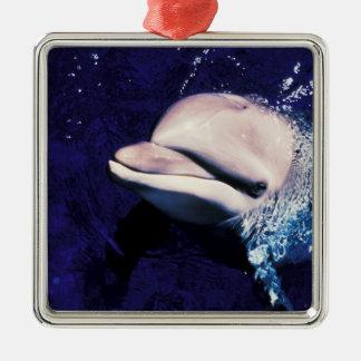 ミクロネシア、パラオ諸島のバンドウイルカのハンドウイルカ属 メタルオーナメント