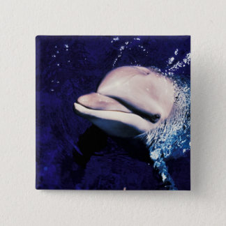 ミクロネシア、パラオ諸島のバンドウイルカのハンドウイルカ属 5.1CM 正方形バッジ