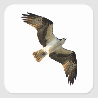 ミサゴの飛行中にロゴ スクエアシール