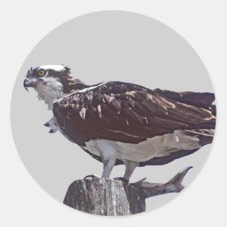ミサゴの鳥 ラウンドシール